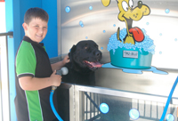 Smiley Dog Wash In Action