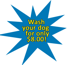 wash your dog for only $6.00 at Smiley Car Wash Meningie